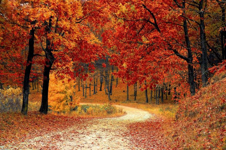 curving road surrounded by trees in fall foliage